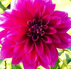 Flower power! (marionvankempen) Tags: allotment flower throughherlens flowers