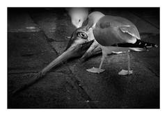 nightmare (paolo paccagnella) Tags: nightmare blackandwhite biancoenero eye seagul best monochrome ass ambiente territorio