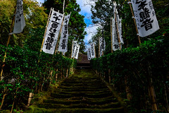 Mossy stone steps of Sugimoto-dera Temple : 杉本寺の石段(鎌倉市二階堂) (Dakiny) Tags: 2018 autumn october japan kanagawa kamakura nikaido city street outdoor temple sugimotodera sugimotoderatemple architecture building stairs steps stone moss nikon d750 nikonafsnikkor28mmf18g afsnikkor28mmf18g