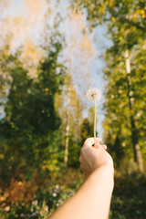 Female hand holding dandelion (wuestenigel) Tags: female trees plant girl enjoy forest natural sunlight nature dandelion green outdoor natur outdoors drausen summer sommer tree baum grass gras mädchen park fairweather schöneswetter flower blume people menschen landscape landschaft beautiful wunderschönen woman frau leaf blatt wood holz garden garten sun sonne outside color farbe fall fallen
