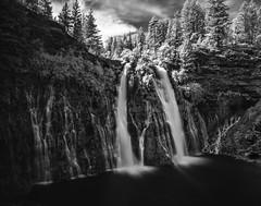 Falls_119952nb (gpferd) Tags: evergreen infrared plant tree water waterfall burney california unitedstates us