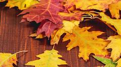 1 (Inmobiliaria Sa Coma) Tags: vegetables yellow autumn leaves