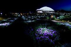 山口ゆめ花博 花の谷ゾーン #1ーYamaguchi Yume Flower Expo Flower Valley Zone #1 (kurumaebi) Tags: yamaguchi 阿知須 山口市 nikon d750 山口ゆめ花博 夜 night yamaguchiyumeflowerexpo