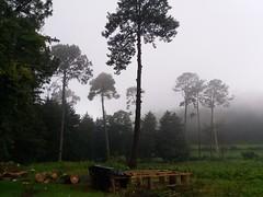Donato Guerra, México (Ddeisy7) Tags: wood green night fog bosque méxico mexico donato guerra estado de d3100 beautiful digital dark forest