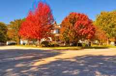 Autumn Delight (kendoman26) Tags: hdr aurorahdr2019 skylumsoftware autumn autumncolors fall fallcolors nikon nikond7100 tokinaatx1228prodx tokina tokina1228 morrisillinois