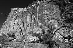 Capitol Reef National Park Visitor Center, Utah State Route 24, Torrey, Utah, USA - 1 (b_kohnert) Tags: nature landscape utahstateroute24 utah usa torrey capitolreefnationalparkvisitorcenter