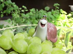 (uliamaro) Tags: grape
