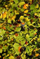 Autumn Leaves (Keith Mac Uidhir 김채윤 (Thanks for 8m views)) Tags: ireland ierland جزيرة أيرلندا ιρλανδία irland irlande 아일랜드 アイルランド írország आयरलैण्ड गणतंत्र irlandia ирландия 爱尔兰共和国 irlanda galway 戈尔韦 голуэй ゴールウェイ 골웨이 irsko iirimaa airija lirlanda irska irlanti 愛爾蘭共和國 írẹ́lándì cộng hòa ประเทศไอร์แลนด์ ιρλανδίασ kilkenny