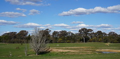 Across the dam to some Art (spelio) Tags: actsep2018shawyassvalleynsw canberra australia sep 2018 rural art sculpture murrumbateman landscape rurual paddock pano