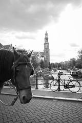 Amsterdam Prinsengracht. (PeteMartin) Tags: bike bridge canal church horse amsterdam netherlands nld