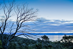 Blue dusk in Tasmania (Marian Pollock) Tags: australia tasmania dusk blue water landscape clouds tree silhouette still bay shoreline