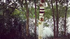 Mirada del árbol (Miriam Nikalu) Tags: nature tree travel aroundtheworld