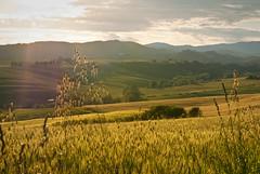 2010-05 GABBIANO, SCARPERIA, ITALY (Marcaia) Tags: scapreria mugello italia italy toscana tuscany landscape sunset countryside nikkor d7500 sky green tree nature light clouds