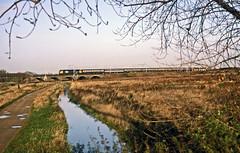 Scotrail 47517 on the 07.00 King's Lynn-London Liverpool Street passing marshland at Clapton on 22November1986. (mikul44171) Tags: 47517 marshland riverlee clapton kings lynn frame tree bush autumnal
