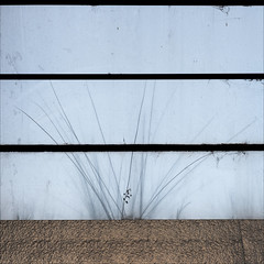 melbourne-1078-ps-w (pw-pix) Tags: lookingup skylight glass panels frames dirst cobwebs weed plant grass texture panel pressedmetal verandah palacetheatre bourkestreet cbd melbourne victoria australia peterwilliams pwpix wwwpwpixstudio pwpixstudio