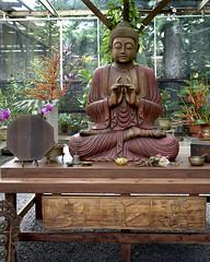 Sacred Garden Buddha 7848 2 (doug.h.butler) Tags: buddha sacredgardenmaui maui hawaii zen meditation sacred holy serene labyrinth
