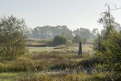 _IMG2428 (Henk de Regt) Tags: the netherlands gelderland natuur nature landscape grass bos forest trees zonsopkomst sunset sundown zonsondergang swamp nederland veluwe landschap gras water bomen moeras