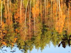 IMG_3401 (germancute) Tags: outdoor nature landscape landschaft thuringia thüringen germany germancute deutschland pond wald water walk wasser tree forest baum see plant teich boot autumn herbst