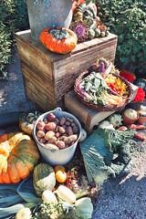 (motty) Tags: stockholm sverige sweden höst autumn bergianska trädgården bergianskaträdgården bergius botanic garden bergiusbotanicgarden vegetable vegetables