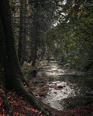 (shayetc) Tags: photography countryside irish ireland northernireland lens sigma sonya6000 woods woodland forest trees moss rust october seasonal green orange red leaves autumn nature