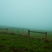Foggy field with gate
