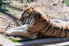 180323 National Zoological Park-09.jpg (Bruce Batten) Tags: animals businessresearchtrips locations mammals nationalzoologicalpark occasions plants shadows subjects terrestrial trips usa vertebrates washingtondc zoos