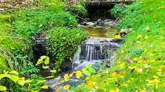 Ruisseau Crupet - 6045 (ΨᗩSᗰIᘉᗴ HᗴᘉS +23 000 000 thx) Tags: crupet ruisseau water waterfall cascade river green nature hensyasmine namur belgium europa aaa namuroise look photo friends be wow yasminehens interest intersting eu fr greatphotographers lanamuroise