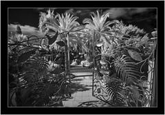 La Palma, Canary Islands, infrared (Bartonio) Tags: 720nm bw blanconegro canaryislands infrared ir islascanarias lapalma losllanosdearidane macro modified monochrome nikkor18mm35 parque sonya7ir