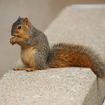 Squirrels in Ann Arbor at the University of Michigan - October 15th, 2018 thumbnail