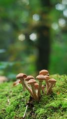 Armillaria ostoyae (Visual Stripes) Tags: fungus fungi mushrooms nature forest autumn bokehlicious bokeh helios44m4 helios alternativelens vintage panasoniclumixg2 microfourthirds mft m43 visualstripes
