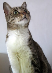 648-May'18 (Silvia Inacio) Tags: princesa tabby gata gatos cat cats