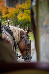 Mr. Richards #1 - A horse with no name (Chi Scotty) Tags: 2018 mackinacisland michigan petoskey leaves