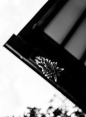 #293 Kusari doi (tokyobogue) Tags: tokyo japan ukimafunado ukimakoen nikon nikond7100 d7100 sigma sigma1750mmexdcoshsm shrine funadohikawashrine bokeh kusaridoi rainchains 鎖樋 blackandwhite blackwhite monochrome