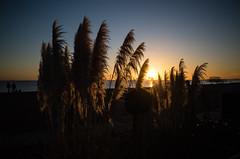 Untitled (agataurbaniak) Tags: evening sunset sun sky ricoh gr ricohgr compact apsc