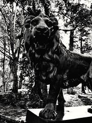 (petitgenetalice) Tags: noirblanc lions statue