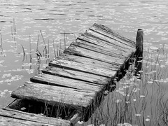 Hinted at (Wicked Dark Photography) Tags: bw wisconsin abandoned autunm blackandwhite decay derelict dock fall forest monochrome nature water woods