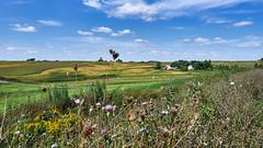Farm in Iowa - EMB03981 (j_m_kubler) Tags: c1 captureonepro olympusem1 iowa landscape farms fields