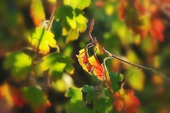 Autumn colour mix (mamietherese1) Tags: ngc world100f npc earthmarvels50earthfaves coth legacy coth5 overtheexcellence