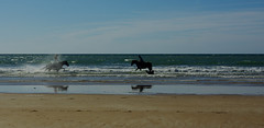 plage de Sauveterre - FRANCE (manguybruno) Tags: water paysage landscape mer sea océan plage beach cheval horse