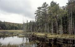Overcast Muskoka Pond West Two (Bill Smith1) Tags: billsmithsphotography heyfsc kodakportra400 muskoka nlp2018 olympusom2n zuikolenses believeinfilm