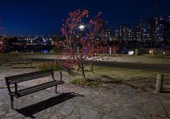 Have A Seat (Clayton Perry Photoworks) Tags: vancouver bc canada fall autumn downtown city explorebc explorecanada night lights leaves seawall bench empty falsecreek