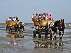 Wattkutschfahrt (QuidoX) Tags: watt ebbe flut nordsee germany beach wattenmeer holiday pferde horses kutsche summer sand schleswig holstein vehicle fuhrwerk schlamm mud northern sea people