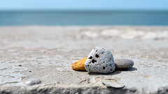 14919794 (aniaerm) Tags: sea coastalfinds sand
