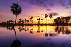 Sunrise in flood season, Southwest Vietnam (minhty0602) Tags: goldensunrise vietnam asia southwestvietnam floodseason flood reflection sunrise morning sunshine palm tree treereflection shadowonthewater agriculture countryside newday