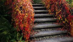 Herfsttafereel - Autumn scene (brigittefotografie) Tags: appeltern herfstkleuren autumncolors najaar fall oktober octobre macro tuinen gardens bloemen flowers planten plants