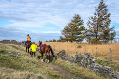 SJ1_2761 - Lancashire moorland - packhorse trail (SWJuk) Tags: swjuk uk unitedkingdom gb britain england lancashire burnley home crownpoint moors moorland grass grasses hillside hills trees packhorsetrail horses riders trail track path drystonewall bluesky clouds landscape countryside scenery 2018 oct2018 autumn autumnal autumncolours nikon d7200 nikond7200 nikkor1755mmf28 rawnef lightroomclassiccc