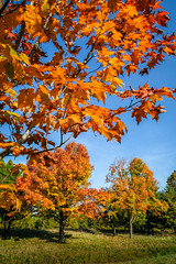 Sheboygan Fall Colors-11
