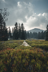 Kleiner Arber, Bayerischer Wald (Sebastian Meier Photography) Tags: arber mountains berge bayerischerwald mountain hiking hike wandern landscape landschaft sony sonyalpha travel vacation bavarianforest herbst baum tree autuum
