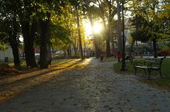 In the park (Baubec Izzet) Tags: baubecizzet pentax park nature autumn leaves trees