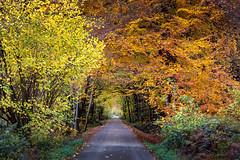 Autumnal Forest   Ratingen   Germany